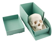 BX_ecophant_skull_box_2